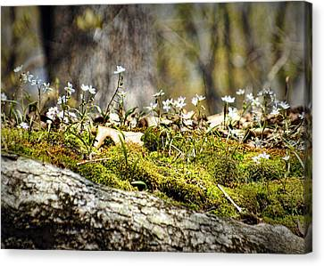 The Forest Floor Canvas Print by Cricket Hackmann