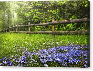 The Forest Is Calling Canvas Print by Debra and Dave Vanderlaan