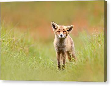 The Funny Fox Kit Canvas Print by Roeselien Raimond