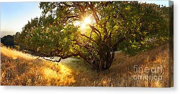 The Giving Tree Canvas Print by Matt Tilghman