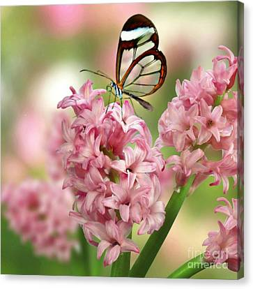 The Glasswing Canvas Print by Morag Bates