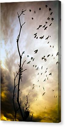 The Gods Laugh When The Winter Crows Fly Canvas Print by Bob Orsillo