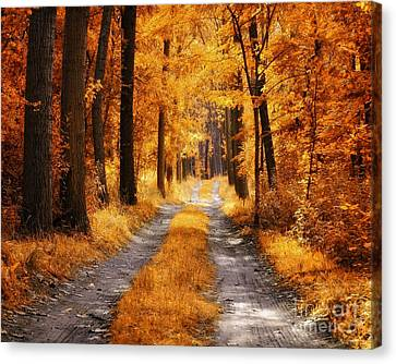 The Golden Path Canvas Print by Mark Borbely