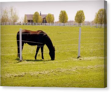 The Grass Is Greener Canvas Print by Cricket Hackmann