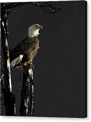 The Great Bald Eagle 1  Canvas Print by Thomas Young