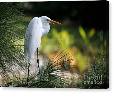 The Great White Egret Canvas Print by Sabrina L Ryan