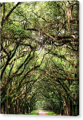The Green Mile Savannah Ga Canvas Print by William Dey