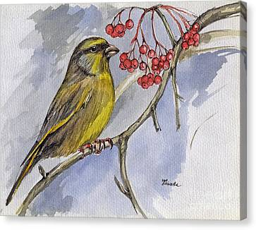 The Greenfinch Canvas Print by Angel  Tarantella
