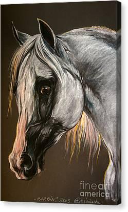 The Grey Arabian Horse Canvas Print by Angel  Tarantella