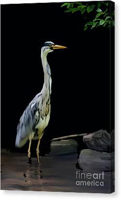 The Grey Heron Canvas Print by Brian Roscorla