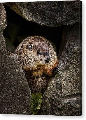 The Groundhog Canvas Print by Bob Orsillo