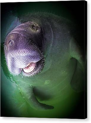 The Happy Manatee Canvas Print by Karen Wiles