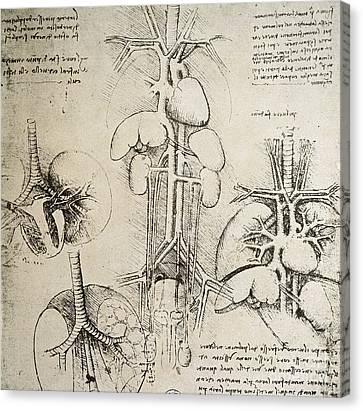 The Heart And The Circulation Canvas Print by Leonardo Da Vinci