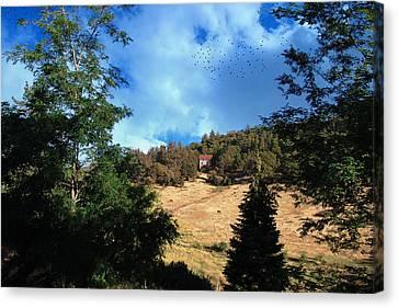 The Hillsides Of Julian Canvas Print by Glenn McCarthy