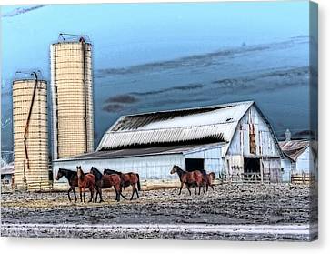 The Horse Barn Canvas Print by Cheryl Cencich