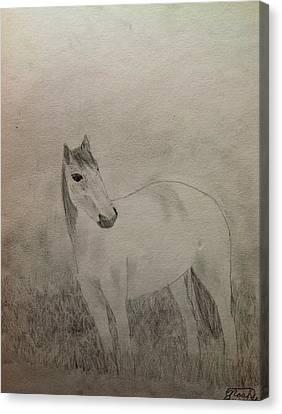 The Horse Canvas Print by Noah Burdett