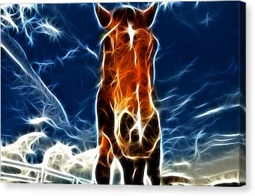 The Horse Canvas Print by Paul Ward