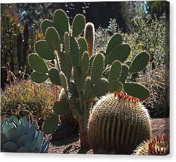 The Huntington Desert Garden Canvas Print by Rona Black