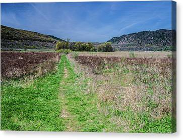 The Ice Age Trail Canvas Print by Jonah  Anderson