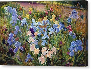 The Iris Bed Canvas Print by Timothy Easton