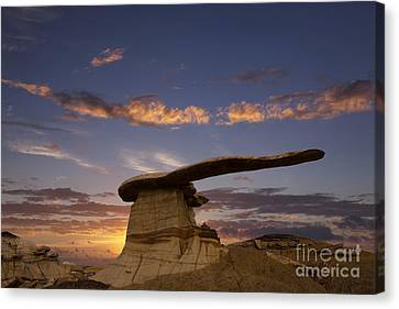The King Of Wings Canvas Print by Keith Kapple