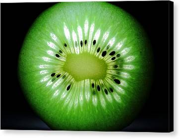 The Kiwi Experiment Canvas Print by David Andersen