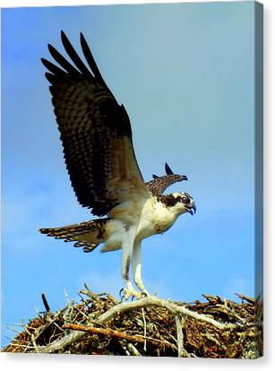The Landing Canvas Print by Karen Wiles