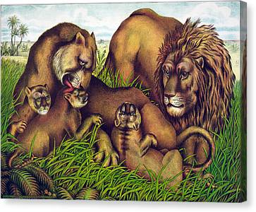 The Lion Family Canvas Print by Georgia Fowler