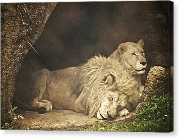 The Lion Sleeps Tonight Canvas Print by Trish Tritz