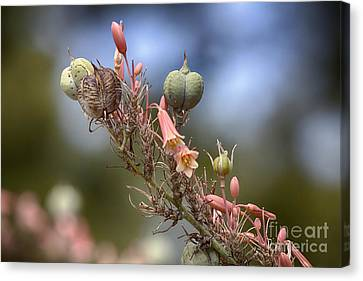 The Little Things In Life Canvas Print by Douglas Barnard