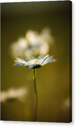 The Little Things In Nature Canvas Print by Matt Dobson