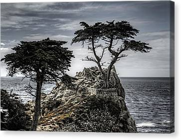 The Lone Cypress Canvas Print by Eduard Moldoveanu