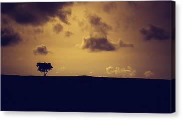 The Loneliness Of A Moorland Tree Canvas Print by Chris Fletcher