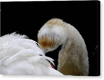 The Look Canvas Print by Terry Cosgrave
