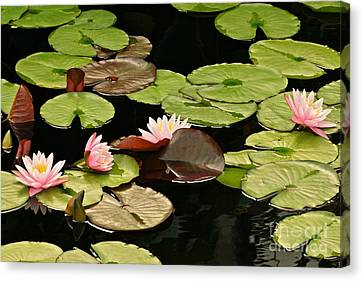 The Loveliness Of Waterlilies Canvas Print by Byron Varvarigos
