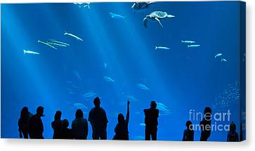 The Magnificent Open Sea Exhibit At The Monterey Bay Aquarium. Canvas Print by Jamie Pham