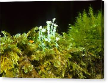 The Minature Green World Canvas Print by Harold Greer