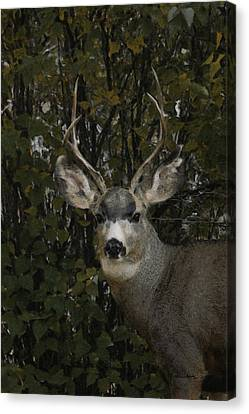 The Mulie Canvas Print by Ernie Echols