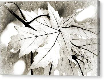 The Mysterious Leaf Abstract Bw Canvas Print by Andee Design