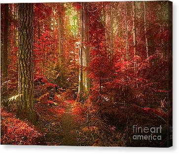 The Mystic Forest Canvas Print by Tara Turner