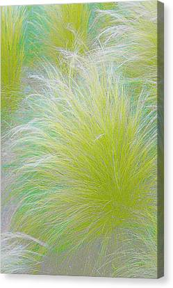 The Nature Of Grass   Canvas Print by Ben and Raisa Gertsberg