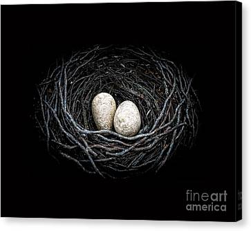 The Nest Canvas Print by Edward Fielding