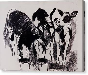 The New Calves Charcoal On Paper Canvas Print by Brenda Brin Booker