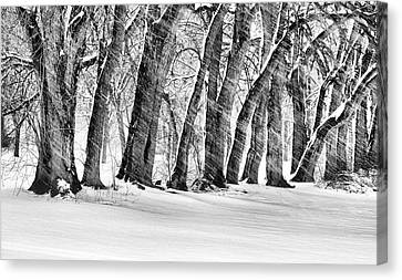 The Noreaster Bw Canvas Print by JC Findley