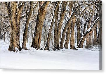 The Noreaster Canvas Print by JC Findley