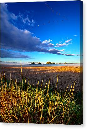 The Northern Winds Sing A Lullaby Canvas Print by Phil Koch