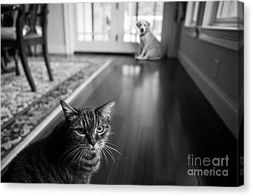 The Old Cat And The New Puppy Canvas Print by Diane Diederich