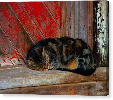 The Old Mill Cat Canvas Print by Julie Dant