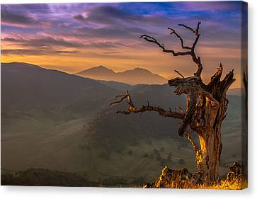 The Old Tree And Diablo Canvas Print by Marc Crumpler