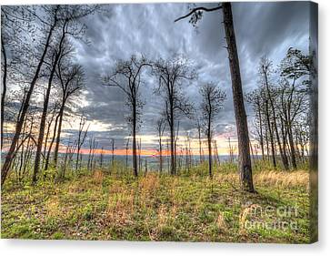 The Ozark National Forest Canvas Print by Twenty Two North Photography